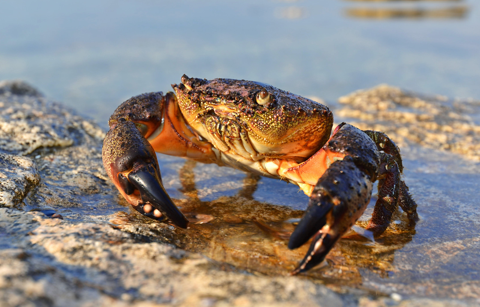 Crab Claws, Sustainability, and Your Money   228Main